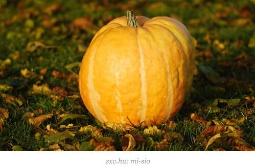 makanan pembantu diet - pumpkin